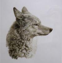 Koyote1a