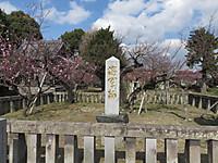 Syogunbai
