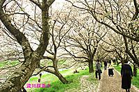 Nagaregawa_2