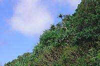 Hahajima2