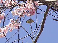 Mejiro201803