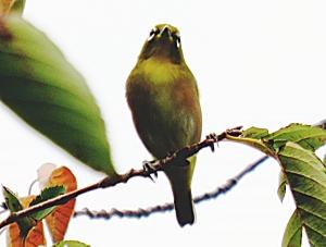 Mejiro1001